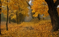 Path through the autumn forest wallpaper 2560x1600 jpg