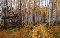 Path through the autumn forest [4] wallpaper 2880x1800 jpg