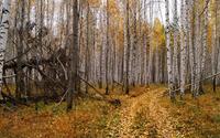 Path through the autumn forest [4] wallpaper 2880x1800 jpg
