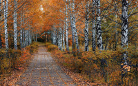 Path through the autumn forest [3] wallpaper 1920x1200 jpg