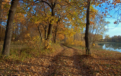 Path through the autumn forest by the lake wallpaper