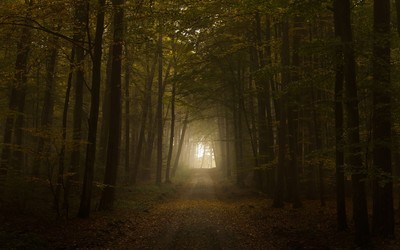 Path through the foggy forest wallpaper