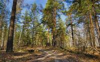 Path through the forest [7] wallpaper 3840x2160 jpg