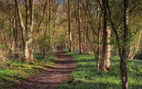 Path through the forest [4] wallpaper 2560x1600 jpg