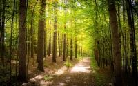 Path through the forest [2] wallpaper 1920x1200 jpg