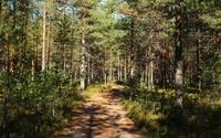 Path through the rusty forest wallpaper 2880x1800 jpg