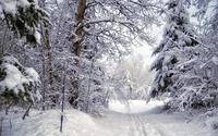 Path through the snowy forest [2] wallpaper 1920x1200 jpg