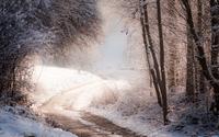 Path through the snowy forest [3] wallpaper 1920x1200 jpg