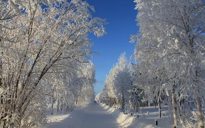 Path through the snowy trees wallpaper
