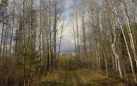 Path through the winter forest wallpaper 2880x1800 jpg