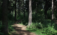Path through thick forest wallpaper 3840x2160 jpg