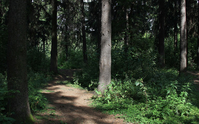 Path through thick forest wallpaper