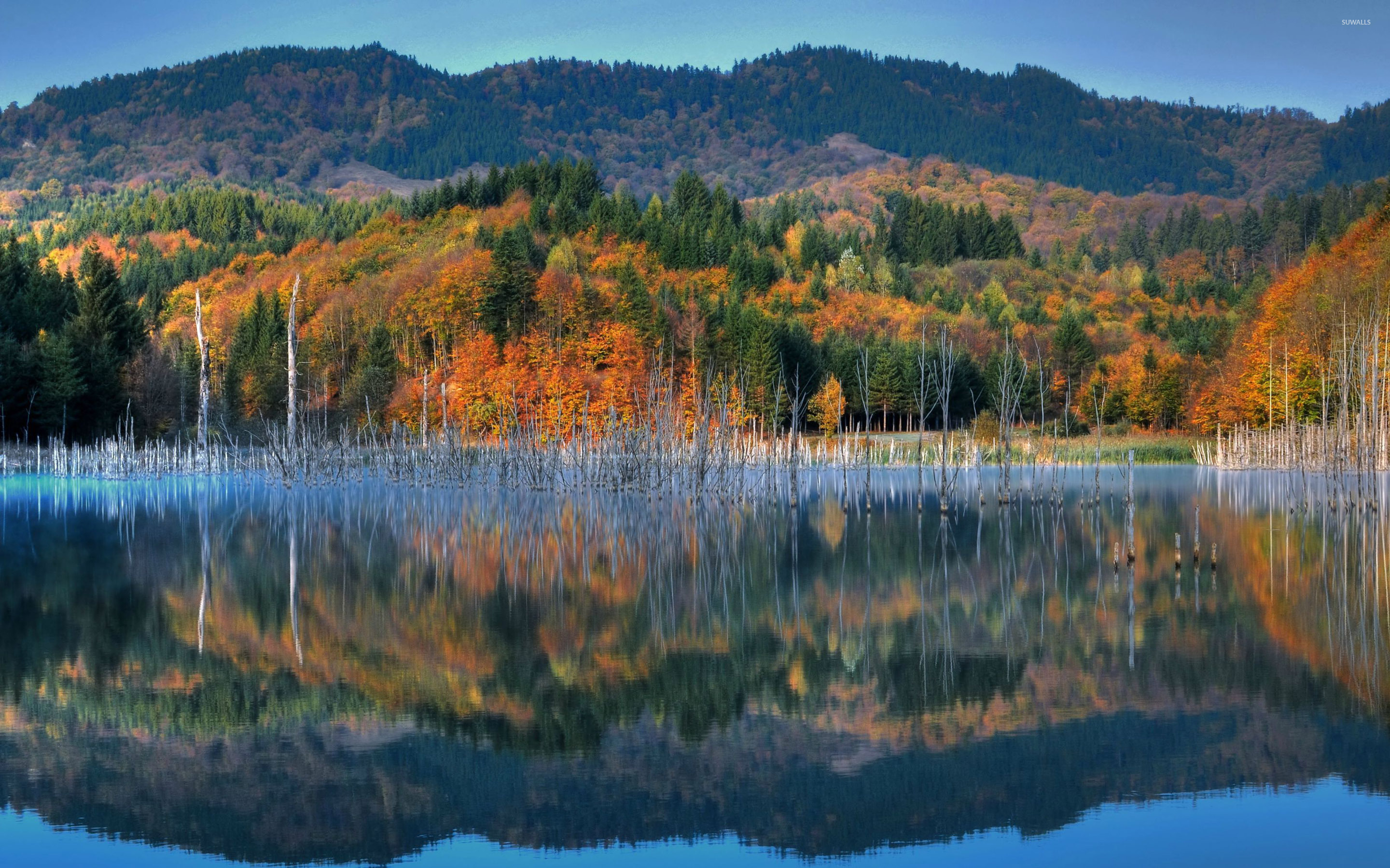 Perfect Reflection Of The Autumn Mountain Wallpaper Nature