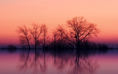 Perfect tree reflection in the calm lake Wallpaper