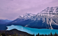 Peyto Lake wallpaper 1920x1200 jpg