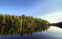 Pine forest by the lake wallpaper 2560x1600 jpg