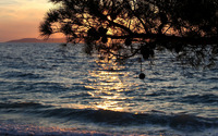Pine tree on the ocean beach wallpaper 3840x2160 jpg