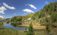 Pine trees on rocky hill on a beautiful summer day wallpaper 2560x1600 jpg