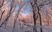 Pink snow on the trees wallpaper 1920x1080 jpg