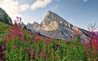 Pink wild flowers rising from the green mountains wallpaper 2560x1600 jpg