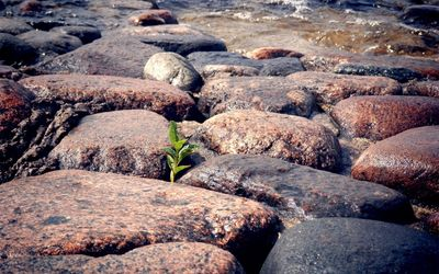 Plant growing through the beach rocks wallpaper
