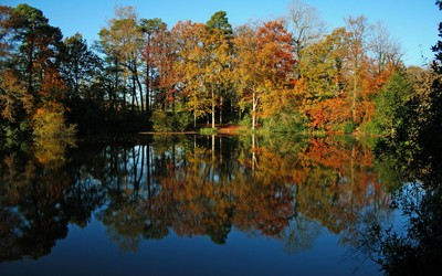 Pond reflecting the yellow trees Wallpaper