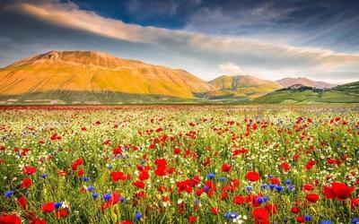 Poppy field near the rusty mountains wallpaper