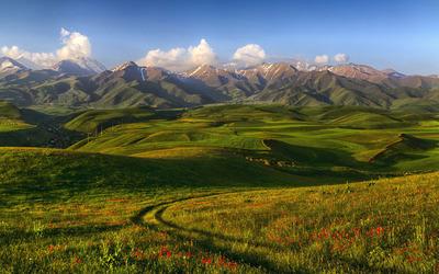 Poppy field on the hills wallpaper