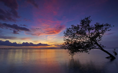 Purple sunset above the water tree wallpaper