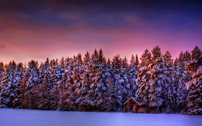 Purple winter sky wallpaper