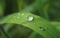 Rain droplets on a leaf wallpaper 2880x1800 jpg