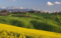 Rapeseed fields near a small town in Italy wallpaper 1920x1200 jpg