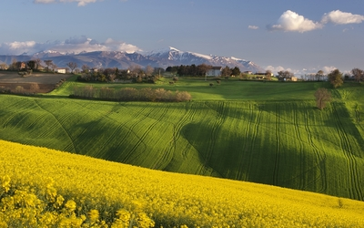 Rapeseed fields near a small town in Italy wallpaper