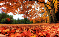 Red autumn leaves wallpaper 1920x1200 jpg