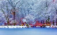 Red bridge in the snowy park wallpaper 1920x1200 jpg