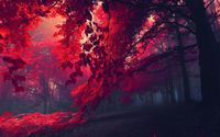 Red forest wallpaper 1920x1080 jpg
