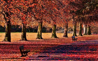 Red leaves in the park wallpaper