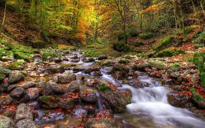 Red leaves resting on the rocks in the whirling river wallpaper