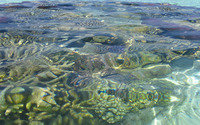 Reef in the clear water wallpaper 3840x2160 jpg