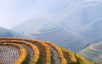 Rice fields wallpaper 1920x1080 jpg