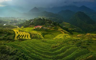 Rice terraces in Vietnam wallpaper