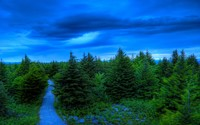 River through the pine forest wallpaper 2560x1600 jpg