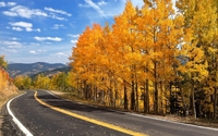 Road aside the autumn forest wallpaper 1920x1200 jpg