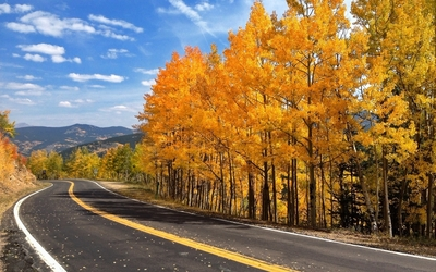 Road aside the autumn forest wallpaper