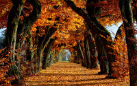Road between trees wallpaper 1920x1200 jpg