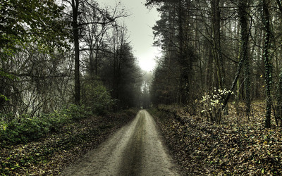 Road in the forest [3] wallpaper