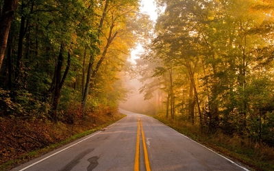 Road through misty autumn forest wallpaper