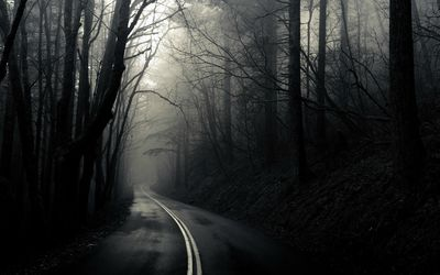 Road through the dark woods wallpaper