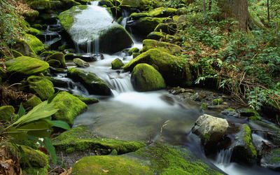 Roaring Fork wallpaper