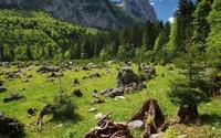Rocks between the green grass by the green forest wallpaper 1920x1200 jpg